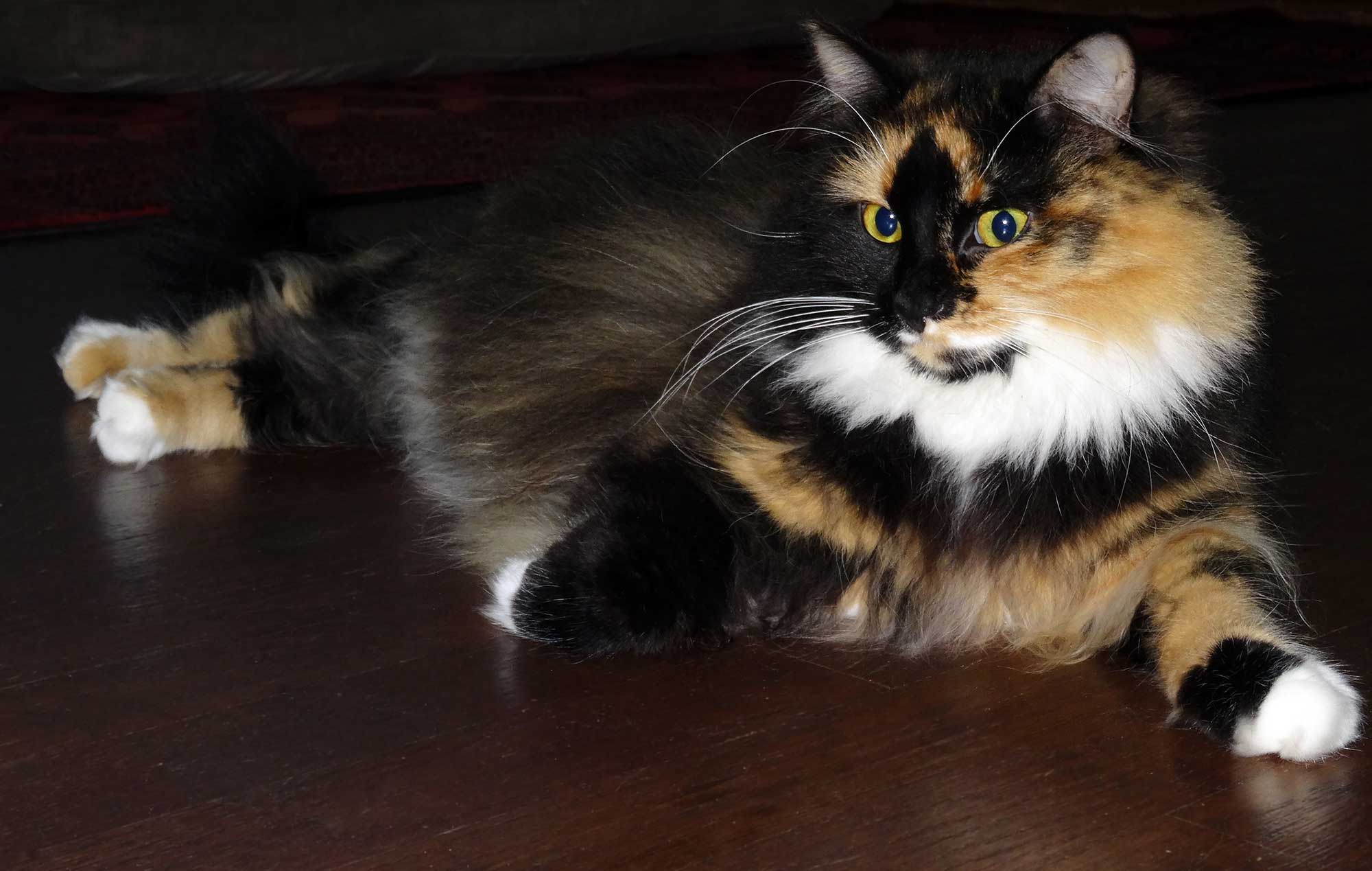 Tips For Moving Cat Long Distances